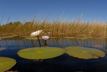 Delta dell'Okavango, Botswana