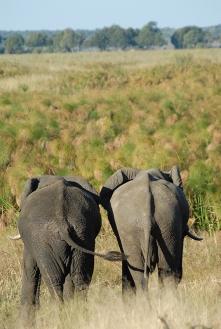 Riserva di Mahangu, Namibia